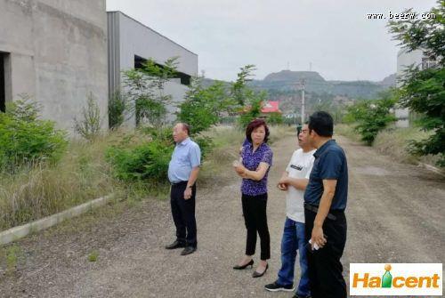金星威廉希尔app网站张铁山:甘肃新厂明年2月投产,老厂开发商住小区
